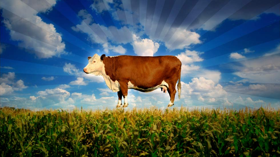 dstv,tvc2,FOOD-INC_Cow-floating-over-corn.jpg